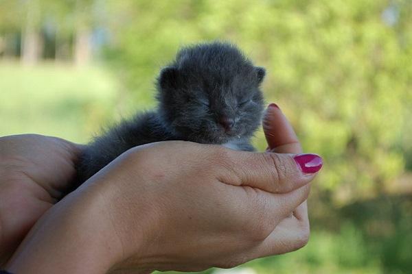 cucciolo di gatto in mano