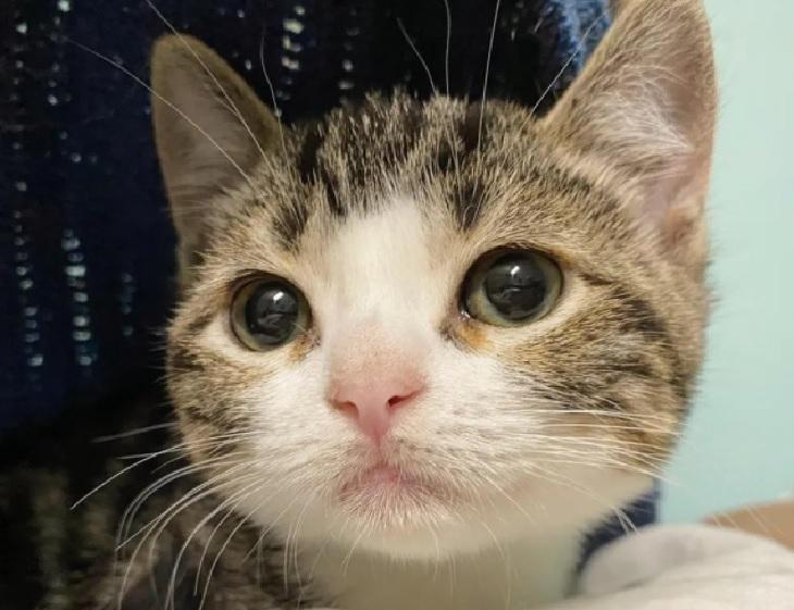 tina gattina scopre felicità adozione