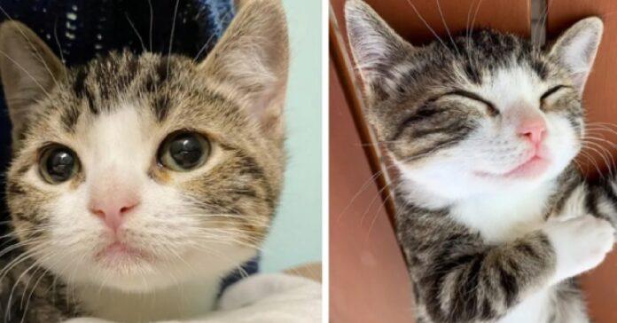 tina la gattina nana che viene adottata