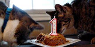 due gatti mangiano una torta con candelina