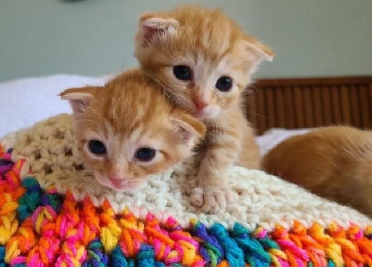 lizzy gattine gemelle volontarie