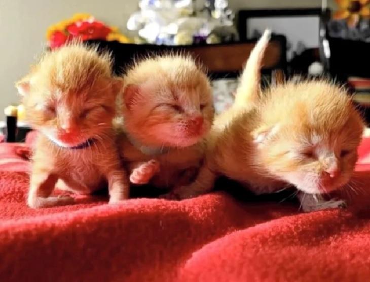 lizzy gattine gemelle salvate