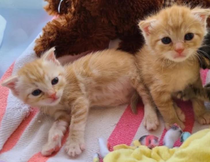 lizzy gemelle gattine divertimento