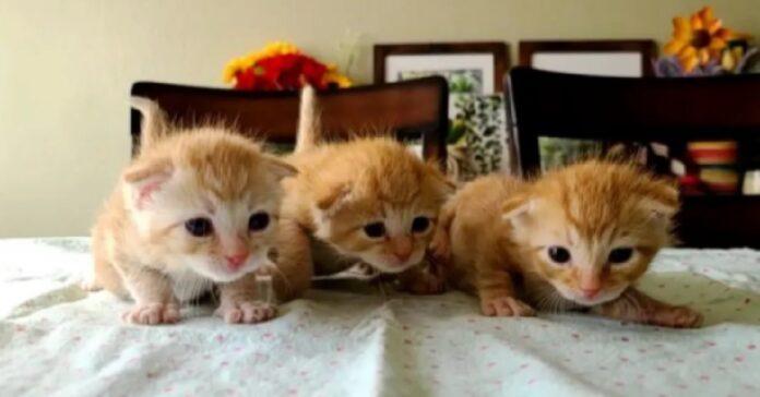 tre gemelle gattine trovate complesso appartamenti
