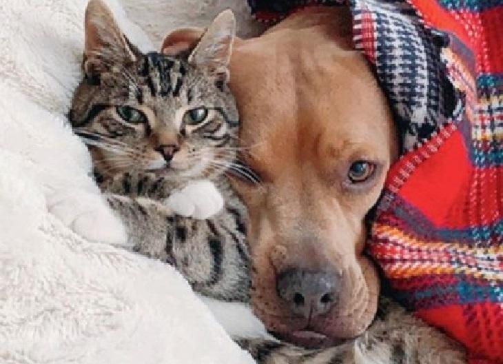 wyatt gatto amicizia istantanea