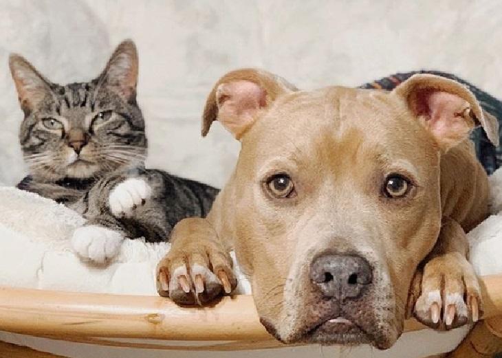 wyatt gatto adozione wesley cane