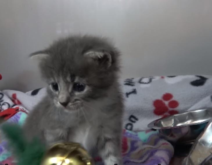 walter gatto aspetta adozione