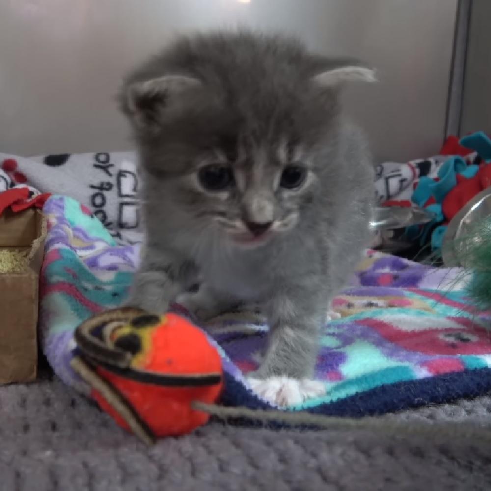walter gattino modi pacati