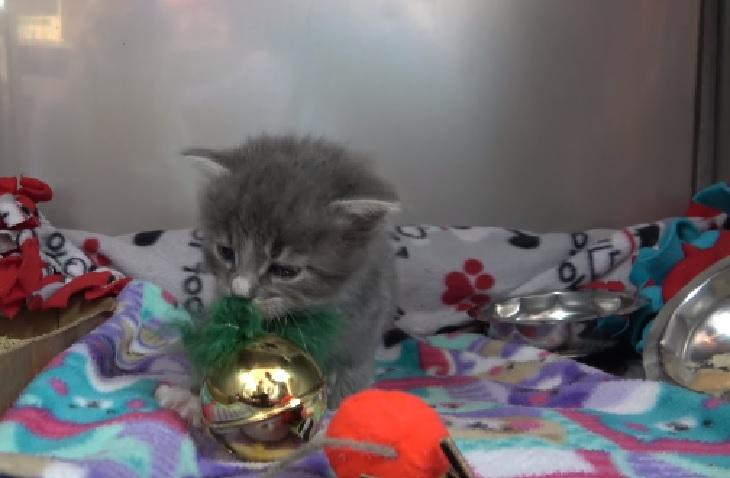 walter gattino arrivo rifugio