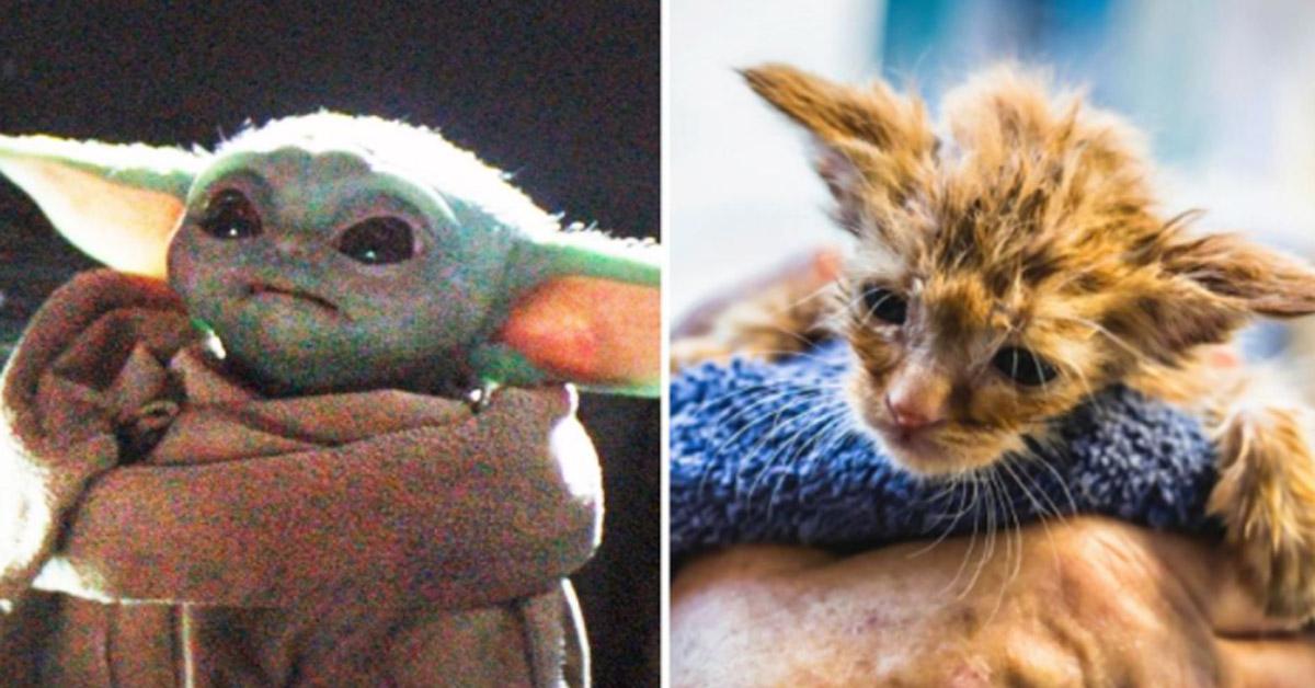 Gattino che sembra Yoda