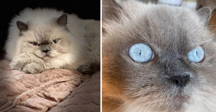 Gattini arrabbiati