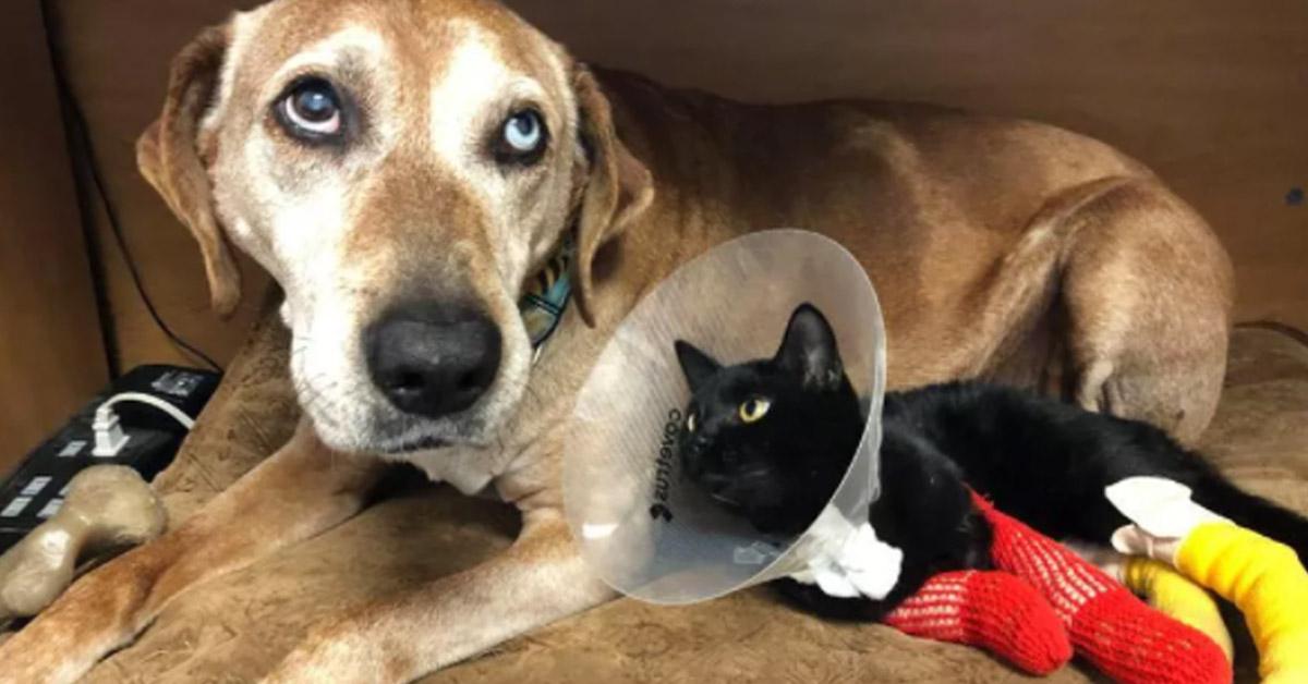 Gattino ferito con un cane