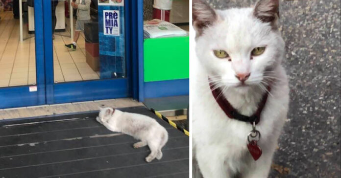 Gattina bianca che aspetta padrona