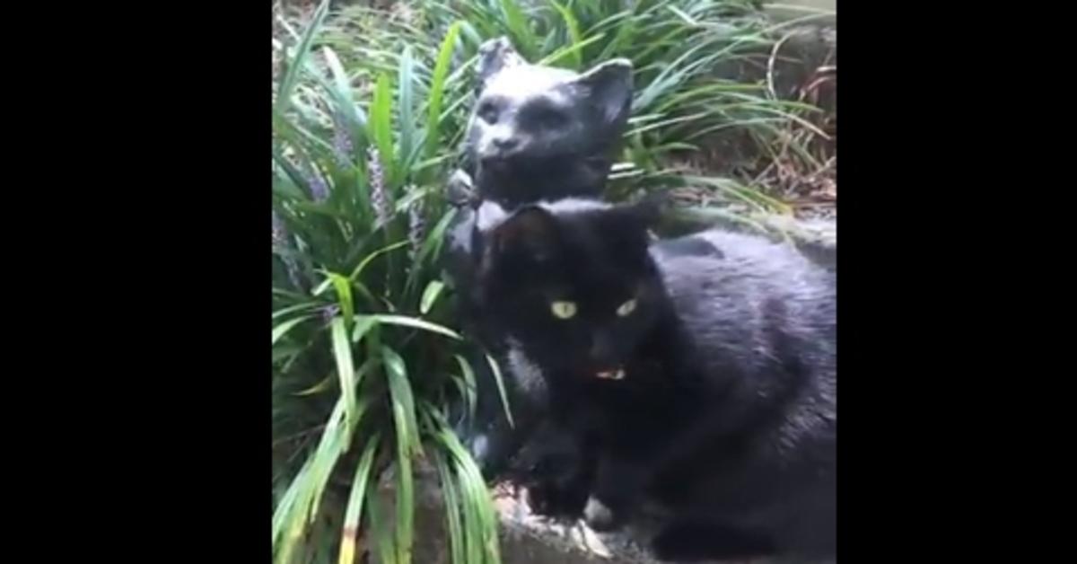 gattino gioca con una statua