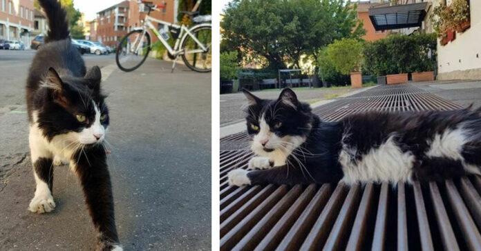 Gatto bianco e nero che osserva
