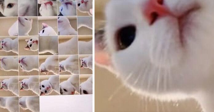 Gattino selfie