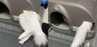 gatto dentro la lettiera