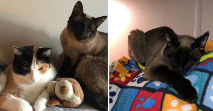 Gattino cieco con un amico