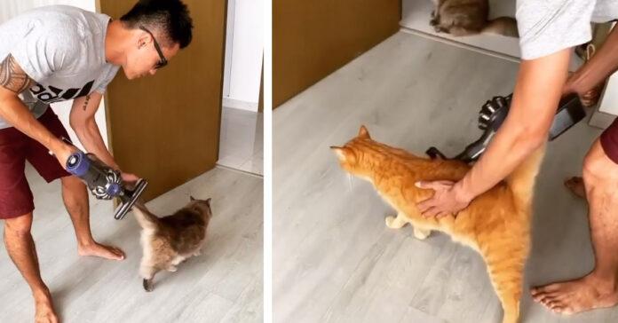 Gattini massaggiati dall'aspirapolvere