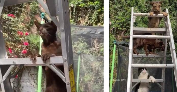 Gattini si arrampicano su uno scaleo