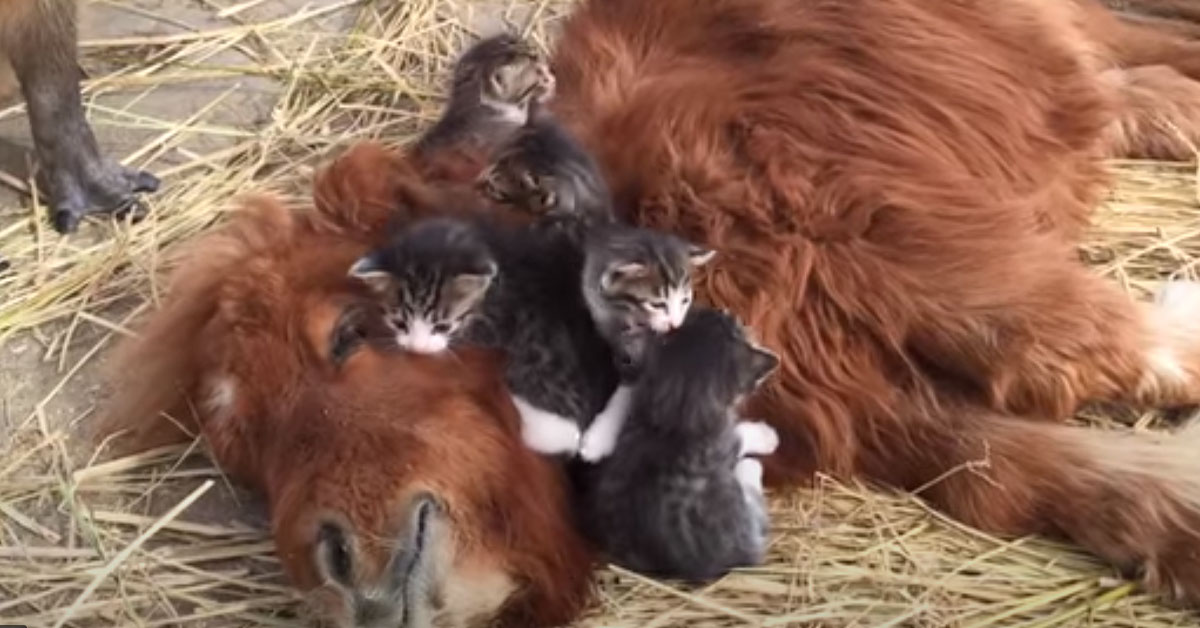Gattini con un pony
