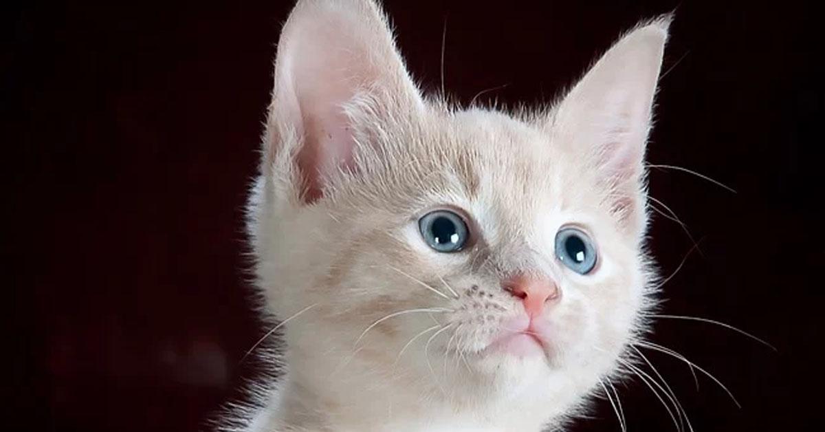 Gattino che guarda in alto
