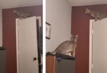 Gatti che cacciano una falena