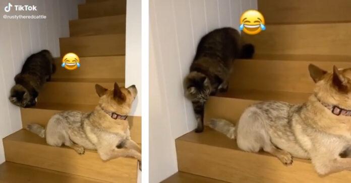 Gattino che passa vicino al cane