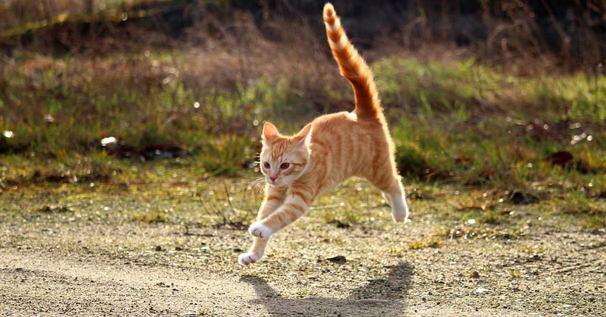 Gattino che corre