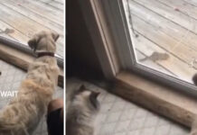 Gattino e cane che osservano un topo