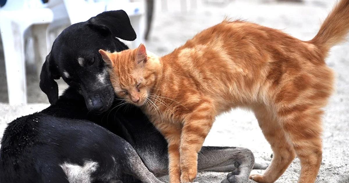 Gattino che si fa le coccole con un cane
