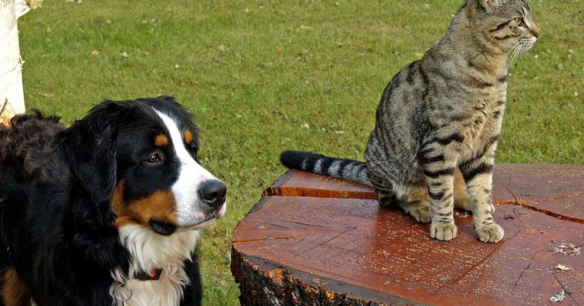 Gatto seduto su un tavolo insieme ad un cane