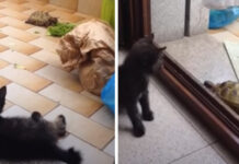Gattino nero con una tartaruga