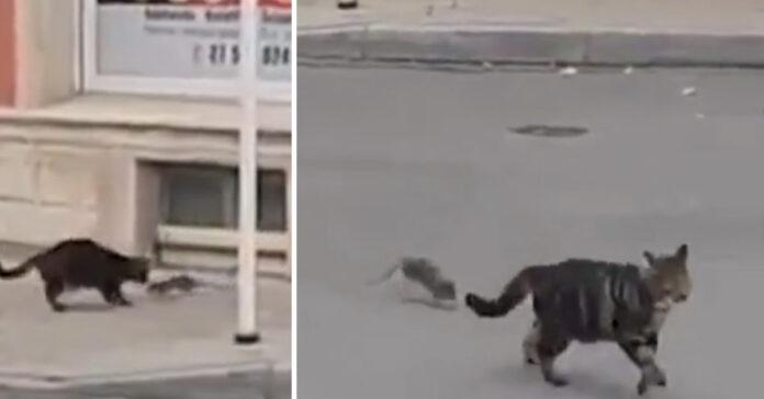 Gatto che gioca con un topo
