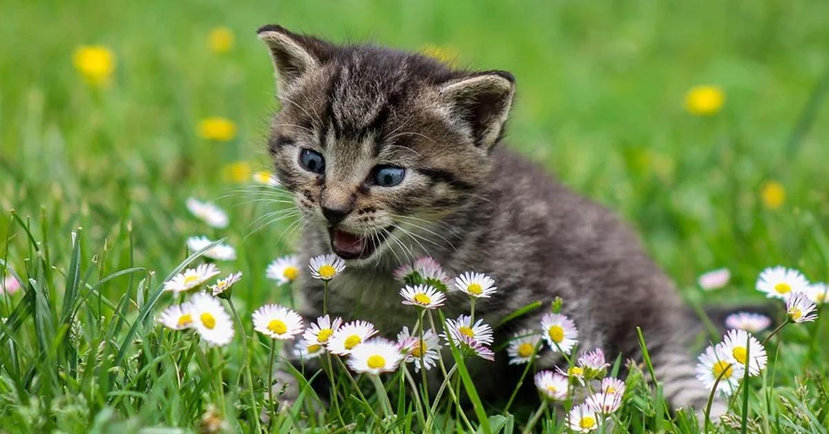 Gattino che gioca in un prato