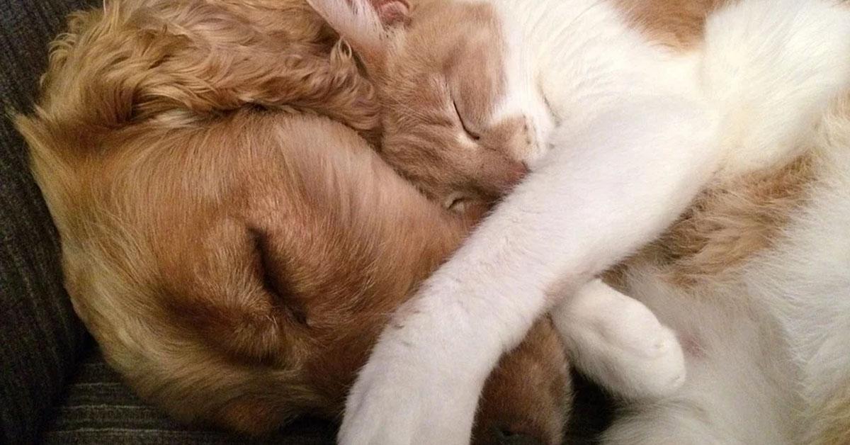 Gattino che dorme abbracciato ad un cane