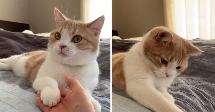 Gattino tiene la mano alla proprietaria
