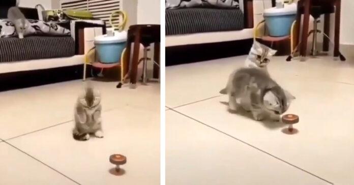 Gattini che giocano con una trottola