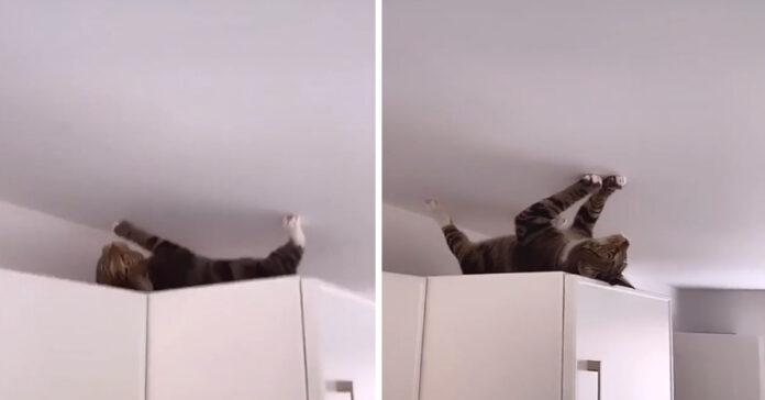 Gattino sopra ad un armadio