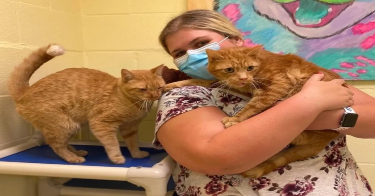 gatti in braccio a una donna