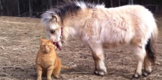 Gattino con un pony