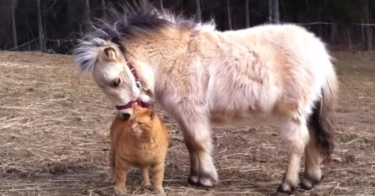 Gattino con un pony