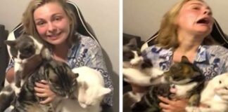 donna in posa con i suoi gatti per una foto