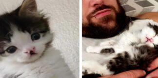 gattina con labbro leporino