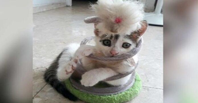 gatto incastrato in un giocattolo