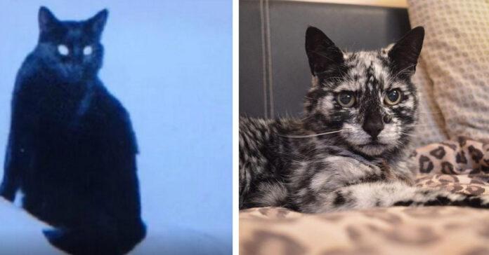 Gattino marmorizzato