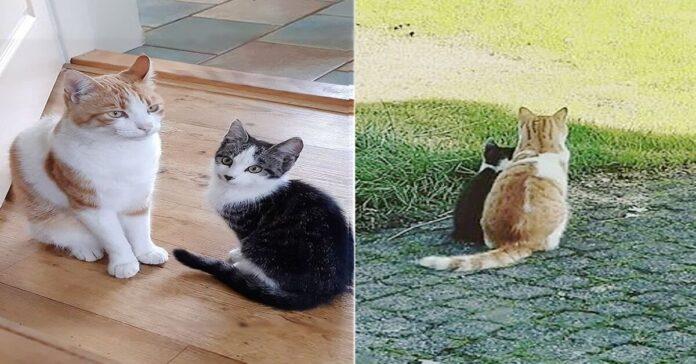 due gattini si fanno compagnia