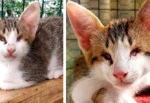 Gattino cieco