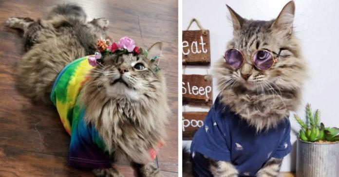 Gattino con un occhio solo