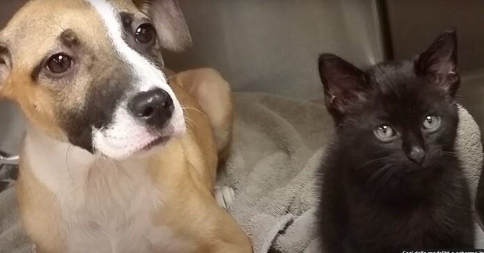 Gatto e cani salvati